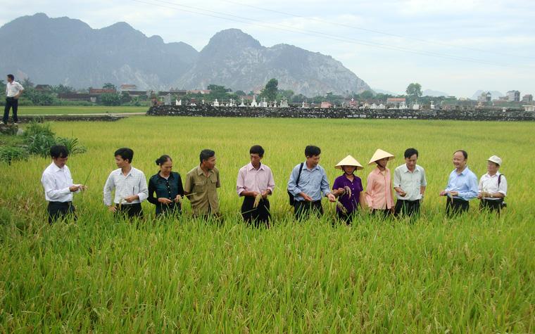 Thị trường phân bón đa dạng, nông dân khó lựa chọn